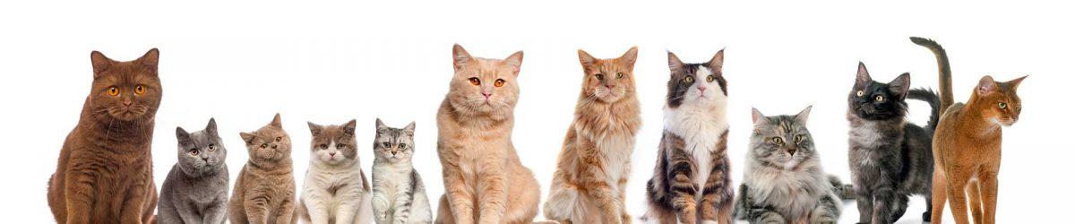 Katten actiemaand